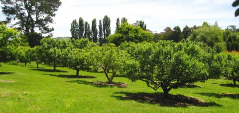 Our beautiful orchard was loved by and nurtured my family and friends. It also became a centre of learning and inspiration over my 16 years in the media